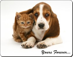 Basset Hound and Cat with Sentiment, AD-BH2