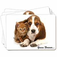 Basset Hound and Cat