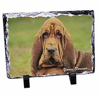 "Blood Hound Dog ""Yours Forever..."" Photo Slate Photo Ornament Gift"