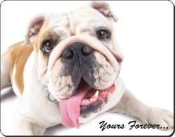 "Playful Bulldog ""Yours Forever..."", AD-BU83y"