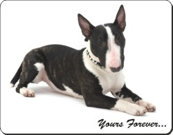 "Brindle and White Bull Terrier ""Yours Forever..."", AD-BUT2y"