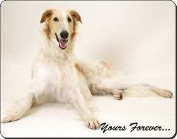 Borzoi with Sentiment, AD-BZ2