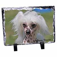 "Chinese Crested Dog ""Yours Forever..."" Photo Slate Photo Ornament Gift"