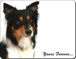 "Tri-colour Border Collie Dog ""Yours Forever..."", AD-CO33y"