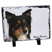 "Tri-colour Border Collie Dog ""Yours Forever..."" Photo Slate Christmas Gift Idea"