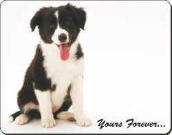 Border Collie Puppy with Sentiment, AD-CO46