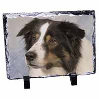 TriCol Border Collie Dog Photo Slate Christmas Gift Ornament