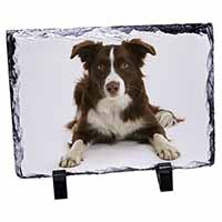 Liver and White Border Collie Photo Slate Christmas Gift Idea