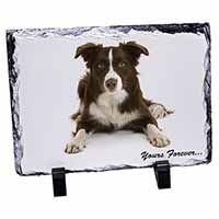 "Liver and White Border Collie ""Yours Forever..."" Photo Slate Photo Ornament Gift"
