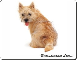 Cairn Terrier with Love, AD-CT1u