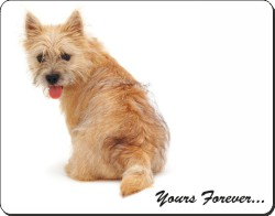 "Cairn Terrier Dog ""Yours Forever..."", AD-CT1y"