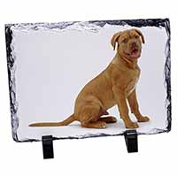 Dogue De Bordeaux Dog Photo Slate Christmas Gift Ornament