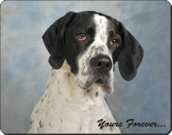 "English Pointer Dog ""Yours Forever..."", AD-EP1y"