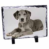 Great Dane Photo Slate Christmas Gift Idea