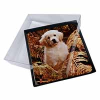 4x Golden Retriever Puppy Picture Table Coasters Set in Gift Box