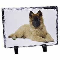 Belgian Shepherd Dog Photo Slate Christmas Gift Idea