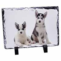Siberian Huskies Photo Slate Photo Ornament Gift