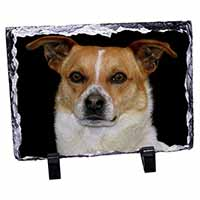Jack Russell Terrier Dog Photo Slate Christmas Gift Idea