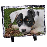 Jack Russell Puppy Dog Photo Slate Christmas Gift Idea