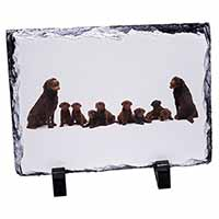 Chocolate Labrador Puppies Photo Slate Christmas Gift Idea