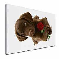 "Chocolate Labrador Pup with Rose X-Large 30""x20"" Canvas Wall Art Print"