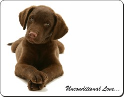 Chocolate Labrador Puppy with Love, AD-L53u