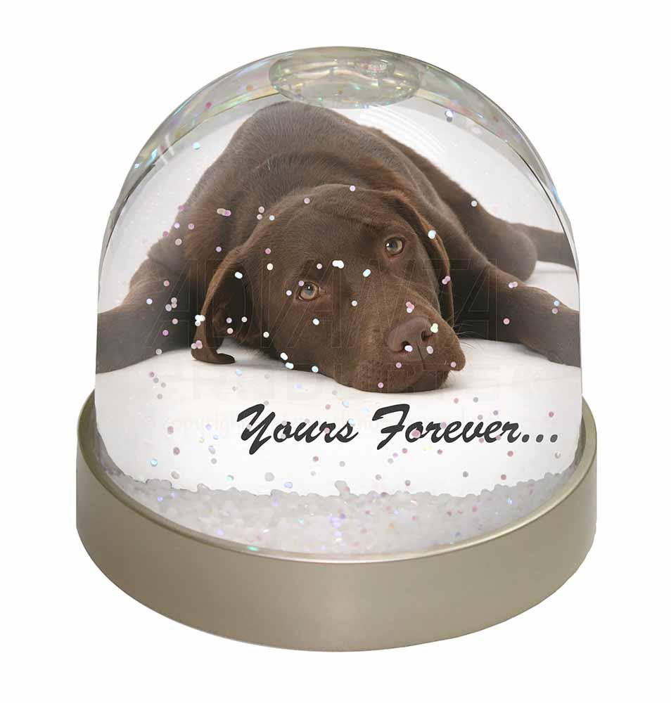 Chocolate Labrador Dog Love Photo Snow Globe Waterball