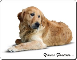 Golden Retriever with Sentiment, AD-L60