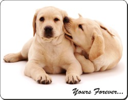 Yellow Labrador Puppies with Sentiment, AD-L61