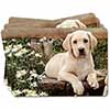 Yellow Labrador Puppy Picture Placemats in Gift Box