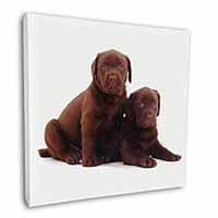 "Chocolate Labrador Puppy Dogs 12""x12"" Wall Art Canvas Picture"