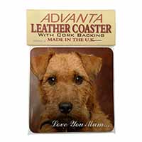 Lakeland Terrier Dog