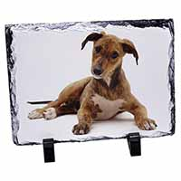 Lurcher Dog Photo Slate Christmas Gift Idea