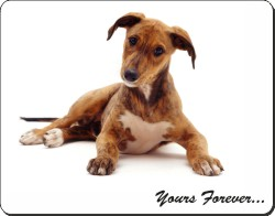 Lurcher Puppy with Sentiment, AD-LU4