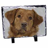 Nova Scotia Duck Tolling Retriever Dog Photo Slate Christmas Gift Ornament