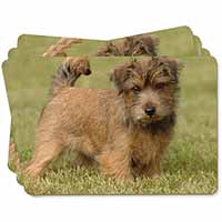 Norfolk Terrier Dog Picture Placemats in Gift Box