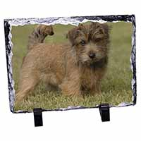 Norfolk Terrier Dog Photo Slate Christmas Gift Idea