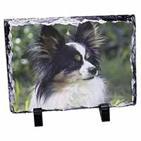 Papillon Dog Photo Slate Photo Ornament Gift