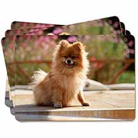 Pomeranian Dog on Decking Picture Placemats in Gift Box