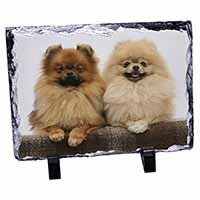 Pomeranian Dogs Photo Slate Christmas Gift Idea