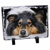 Tri-Colour Rough Collie Dog Photo Slate Photo Ornament Gift