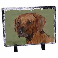 Rhodesian Ridgeback Dog Photo Slate Photo Ornament Gift