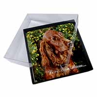 4x Irish Red Setter Dog