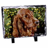 Irish Red Setter Dog