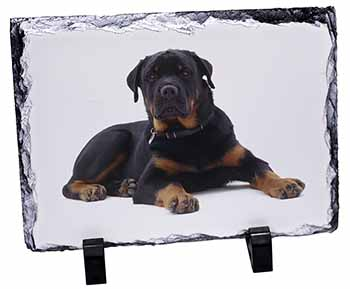 Rottweiler Dog Photo Slate Photo Ornament Gift