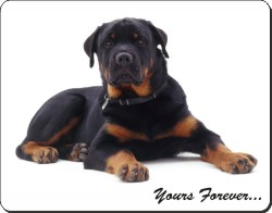 Rottweiler with Sentiment, AD-RW5