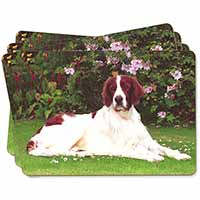 English Setter Dog Picture Placemats in Gift Box