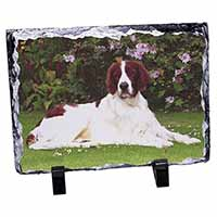 English Setter Dog Photo Slate Photo Ornament Gift
