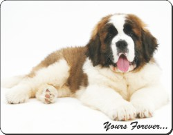 St Bernard with Sentiment, AD-SBE6