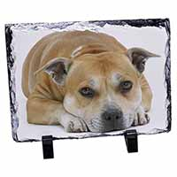 Red Staffordshire Bull Terrier Dog Photo Slate Photo Ornament Gift